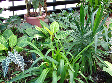 With proper care, houseplants such as these can add character to a home.