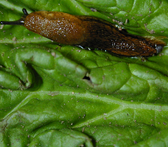 A slug.
